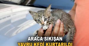 Antalya'da araca sıkışan yavru kedi...