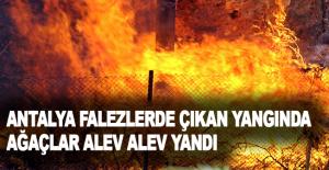 Antalya falezlerde çıkan yangında ağaçlar alev alev yandı