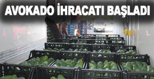 Alanya'da avokado ihracatı başladı