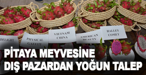 Antalya'da üretilen pitaya meyvesine dış pazardan yoğun talep