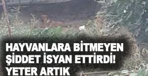 Hayvanlara Bitmeyen Şiddet İsyan Ettirdi!...