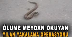 Ölüme meydan okuyan yılan yakalama operasyonu