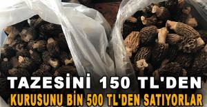 Tazesini 150 TL'den, kurusunu bin 500 TL'den satıyorlar