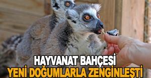 Hayvanat Bahçesi yeni doğumlarla zenginleşti