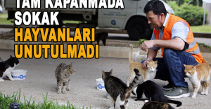 Tam kapanmada sokak hayvanları unutulmadı