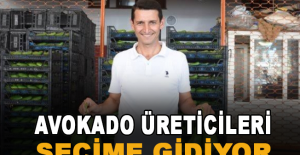 Alanya'da avokado üreticileri seçime gidiyor