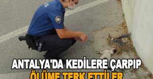 Antalya'da kedilere çarpıp ölüme terk ettiler