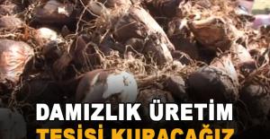 Tarım ve Orman Bakanlığı izniyle verilen kota oranında söküm yapılıyor