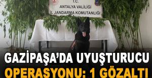 Gazipaşa'da uyuşturucu operasyonu: 1 gözaltı