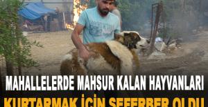 Mahallelerde mahsur kalan hayvanları kurtarmak için seferber oldu