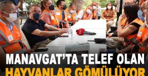 Manavgat'ta telef olan hayvanlar gömülüyor