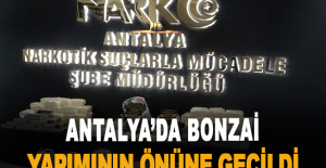 Antalya'da bonzai yapımının önüne geçildi