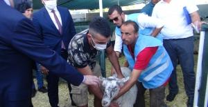 MHP'den Manavgat'a küçükbaş ve büyükbaş hayvan desteği